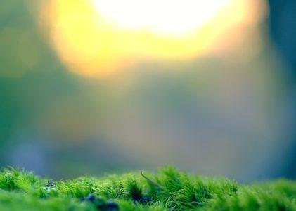 L'écologie, un véritable mode de vie